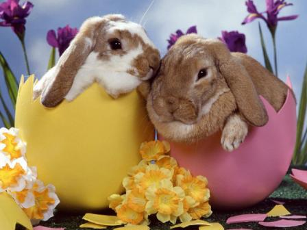 Blog_Easter-bunnies