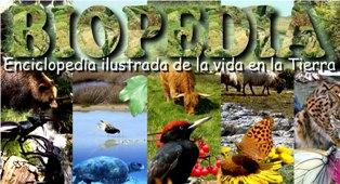 biodiversidad,biomas