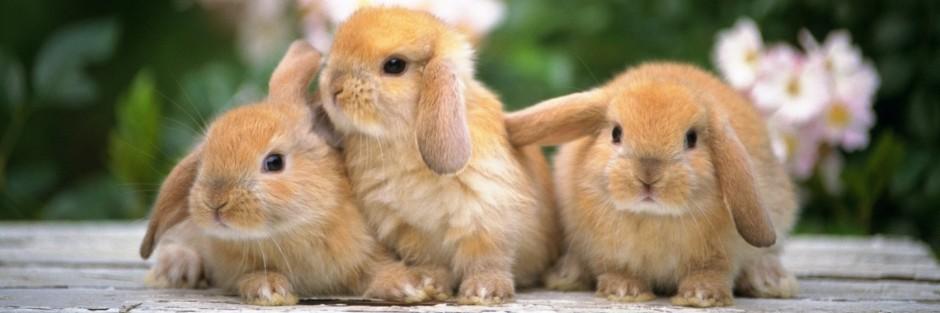 Dibujos de conejos  CONEJOPEDIA