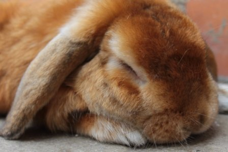 not_disturb__sleeping_rabbit_by_fiorella_fifi-d4k9vft