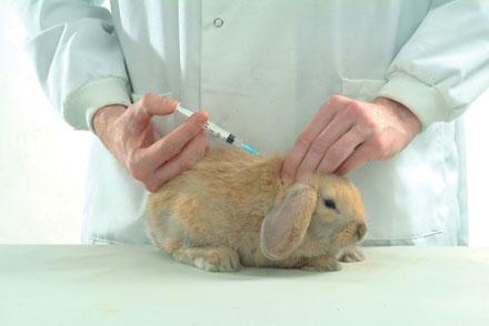 rabbit vax